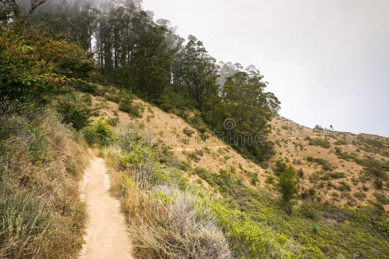 Eucalyptus tree grove on the Pacific Ocean Coast, Headlands, Golden Gate National Recreation Area, Marin County, California stock photos