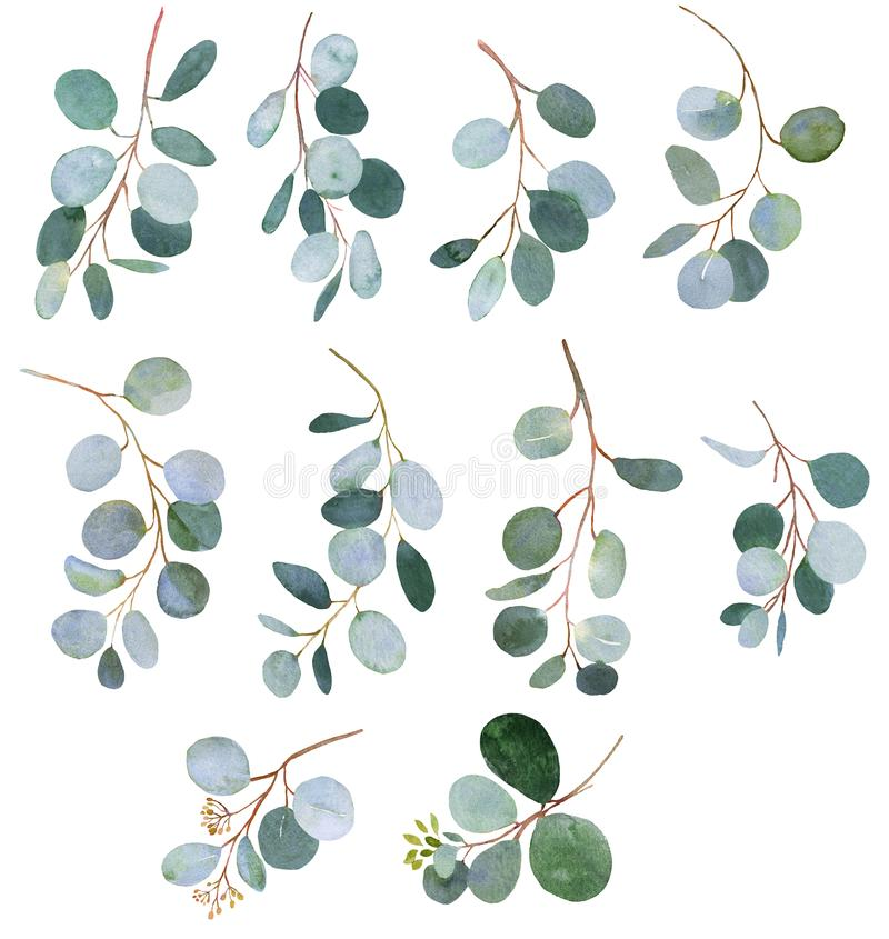Eucalyptus watercolor greenery twigs illustrations. Eucalyptus green watercolor twigs illustrations royalty free illustration