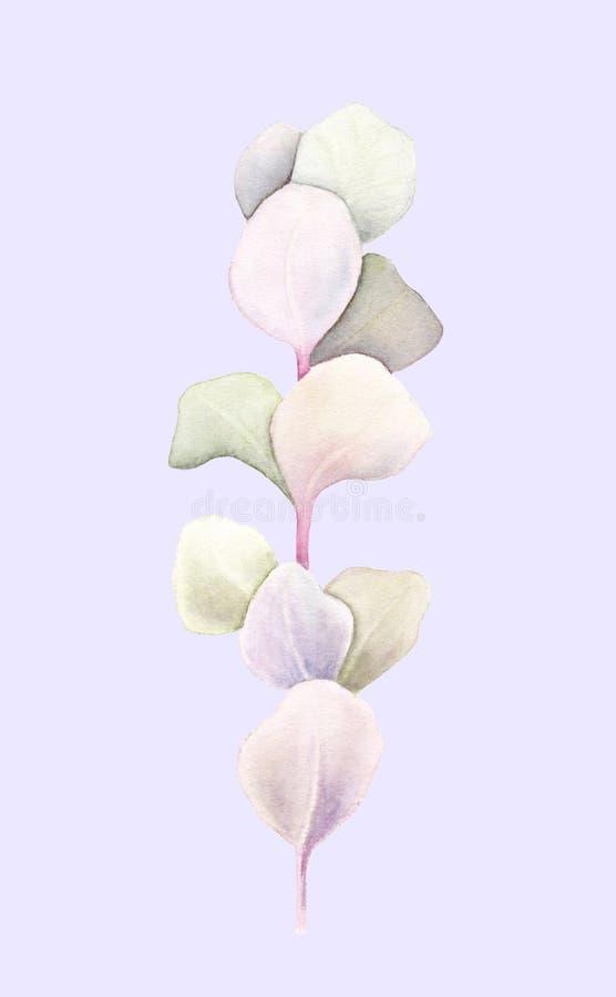 Eucalyptusbrunch met bladeren op lichtpaarse achtergrond worden geïsoleerd die Waterverfhand geschilderde illustratie Botanisch r stock illustratie