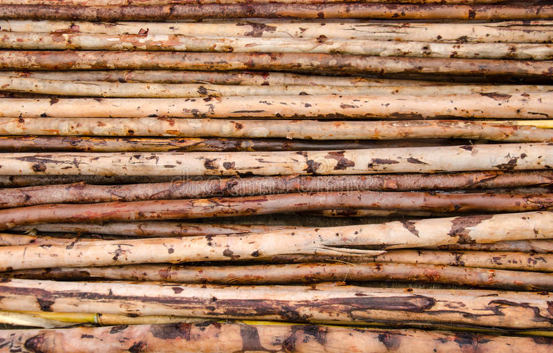 Eucalyptushout royalty-vrije stock fotografie