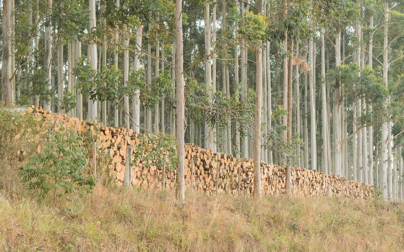 Eucalyptushoutsnede en verwerkte 02 jpg royalty-vrije stock afbeeldingen