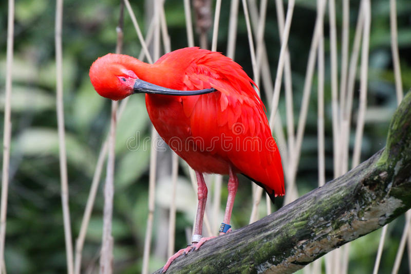 Colorful bird royalty free stock photo
