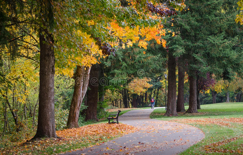 Eugene Bike Path. Fall colors explode as a lone bicyclist can be seen in the distance riding along the riverfront bike path in Eugene, Oregon stock images