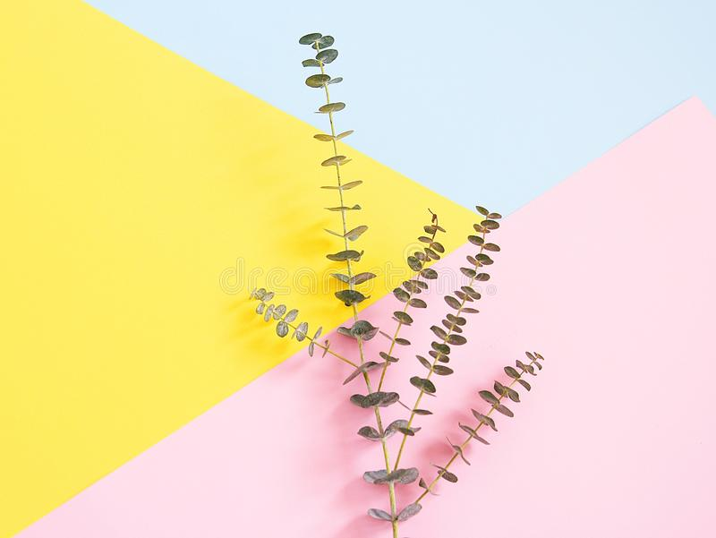 Eukaliptusowe gałąź fotografia stock