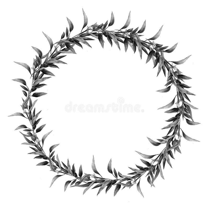 Eukaliptusowego liść gałąź nakreślenia wektorowe grafika ilustracji