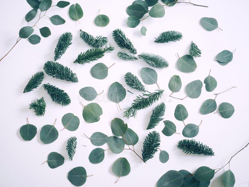 Eukaliptusowy i jedlinowy drzewo zdjęcie stock