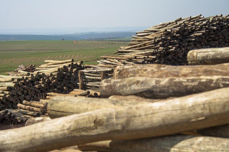 Download Eukalyptus stockfoto. Bild von landwirtschaft, umwelt - 47100534