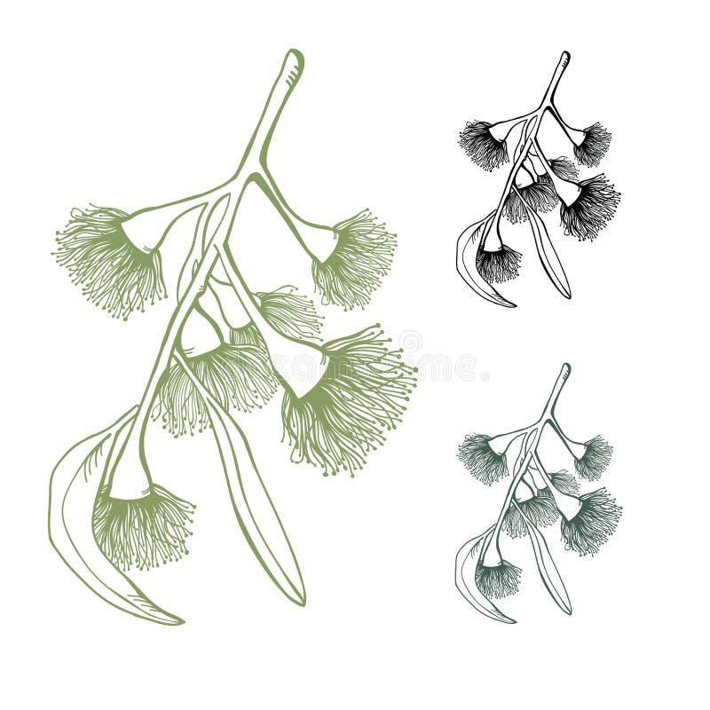 Eukalyptus som blommar den Gumnut vektoruppsättningen vektor illustrationer