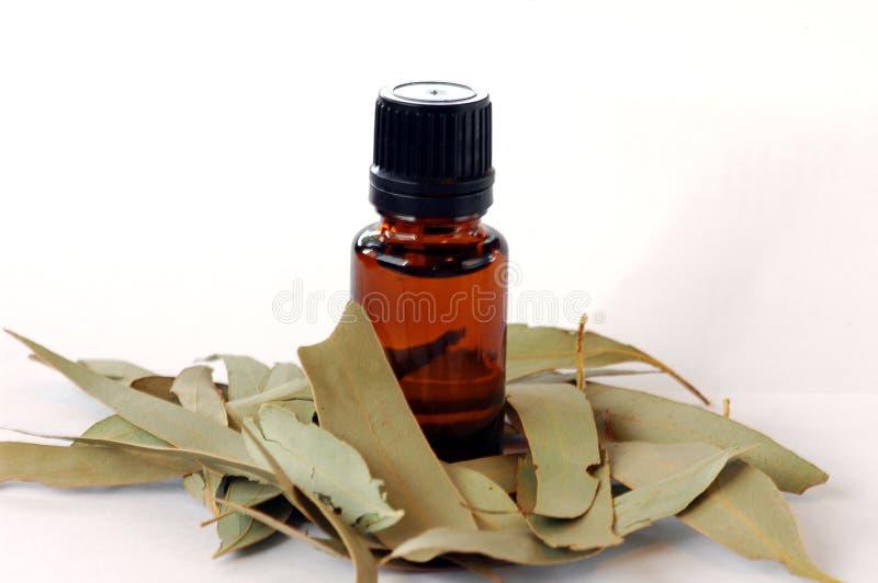 Eukalyptus-wesentliches Schmieröl lizenzfreie stockfotos