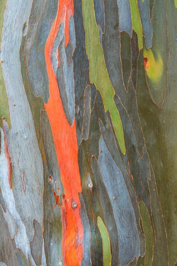 Eukalyptusbarkenbeschaffenheit lizenzfreie stockfotos