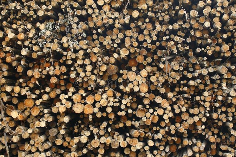 Eukalyptusklotz stockbild