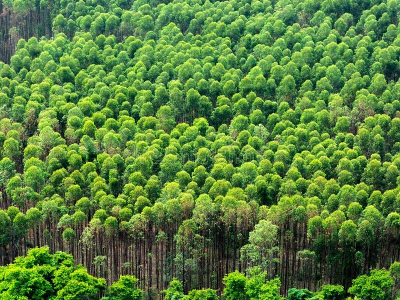 Eukalyptuskoloni i Brasilien - cellulosapappersjordbruk - birdseyesurrsikt arkivbild