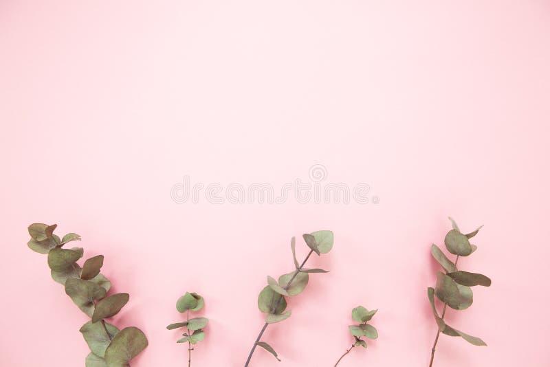 Eukalyptusniederlassungen auf tausendjährigem rosa Hintergrund mit Kopienraum Unterer Eukalyptus Minimalismusebenenlage Für Leben lizenzfreie stockfotos