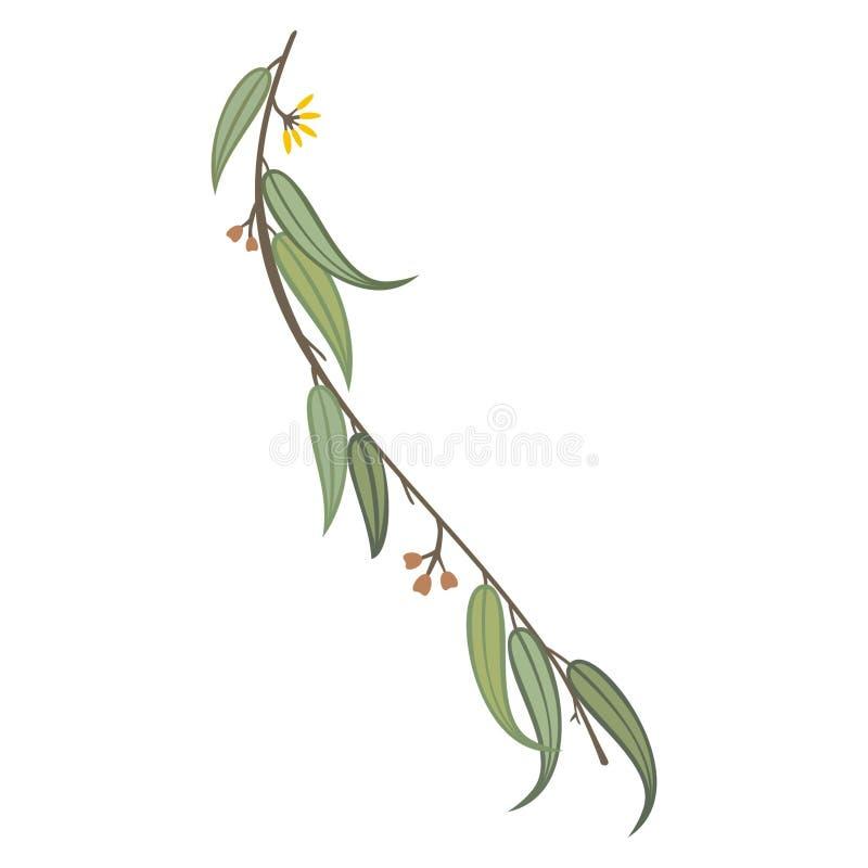 Eukalyptusträdfilial med sidor royaltyfria bilder