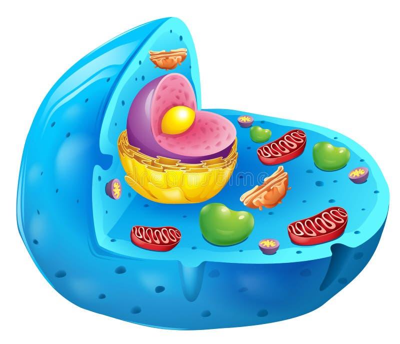 Eukaryotic клетка бесплатная иллюстрация