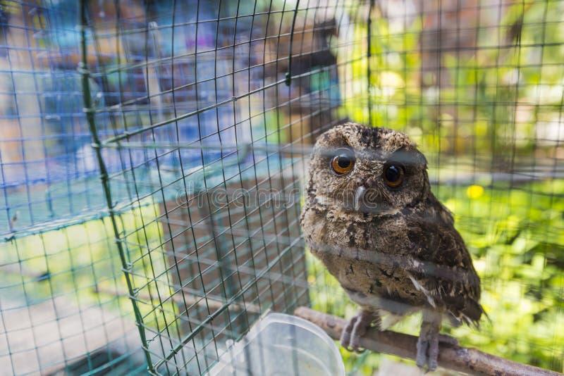 vogelmarkt stockfotos  laden sie 314 royaltyfree fotos