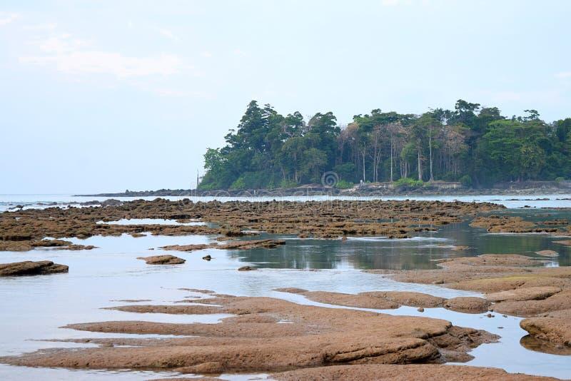 Eulittoral strefa podczas Niskiego przypływu - spokój wody i Jasnym niebieskim niebem i drzewami w tle przy Skalistą, Piaskowatą  obraz royalty free