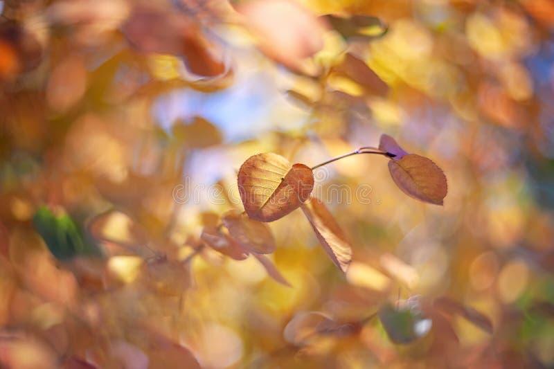 Euonymus tendre d'arbuste de rose d'automne un jour ensoleillé Art wallpaper Foyer mou sélectif photo stock