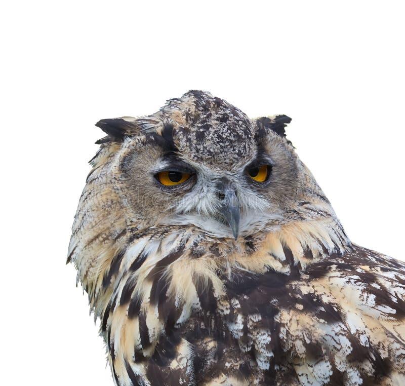 Eurasiático Eagle Owl (bubón del bubón). Aislado. imagenes de archivo