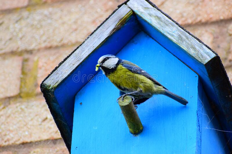 A Bird With A Grub On A Nesting Box royalty free stock photography