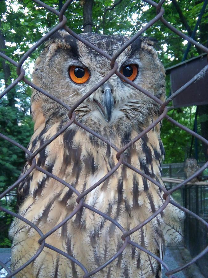 Beautiful and friendly owl in zoo royalty free stock image