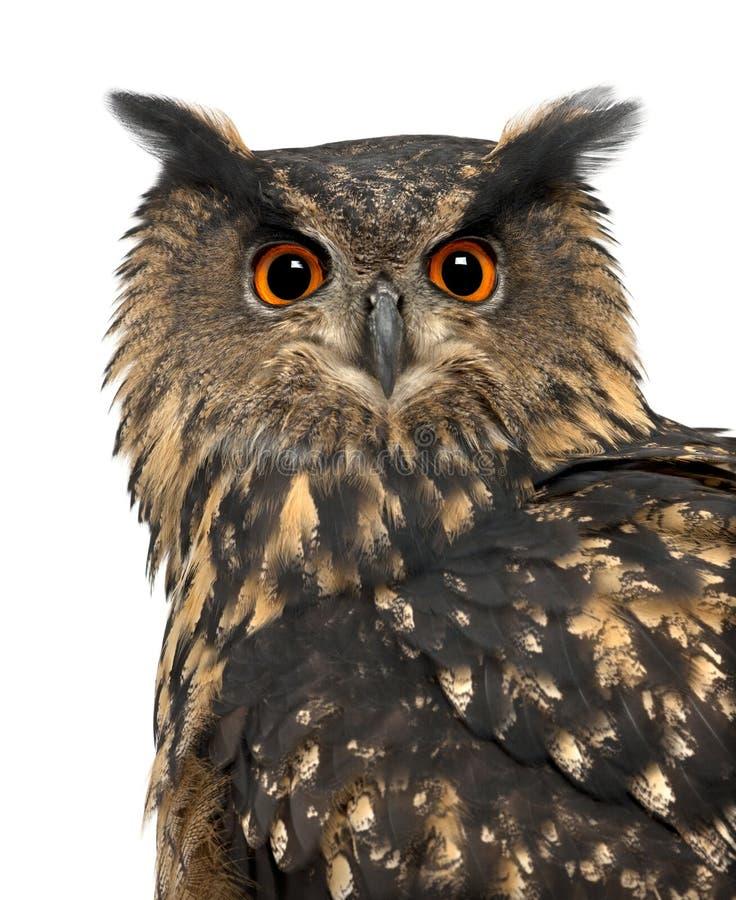 Download Eurasian Eagle-Owl, Bubo Bubo, 15 Years Old Stock Image - Image: 26424149