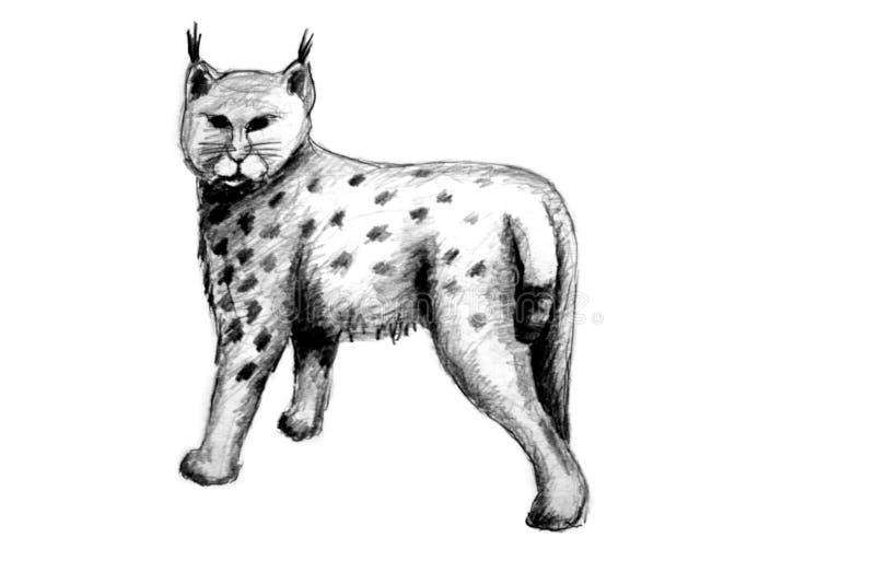 Download Eurasian Lynx stock illustration. Illustration of black - 13119111