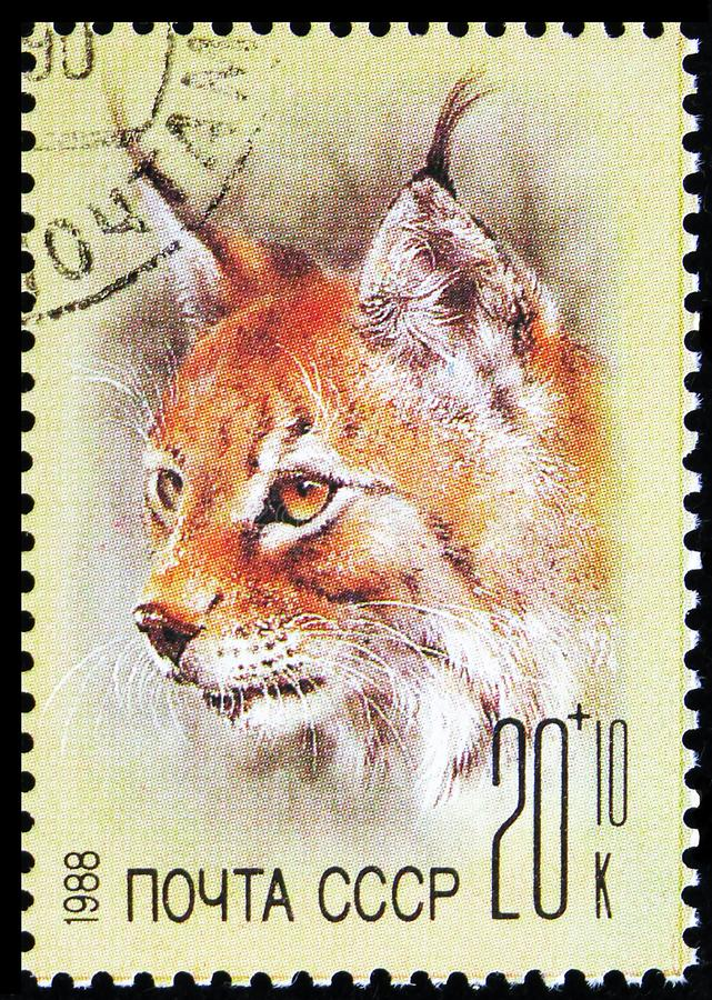 Eurasian Lynx (Lynx lynx), ZOO Relief Fund serie, Circa 1988 arkivfoto