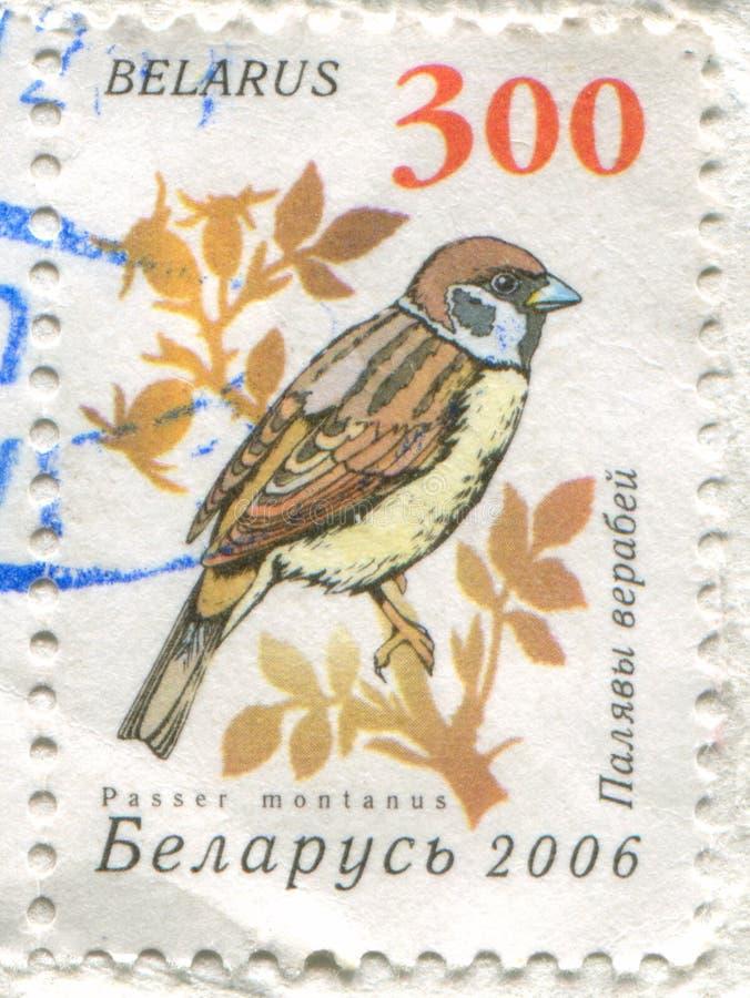 Eurasischer Baumspatz lizenzfreies stockfoto