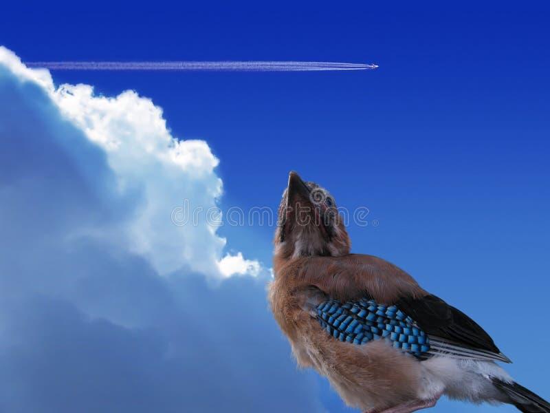 Eurasischer Jay stockfotografie