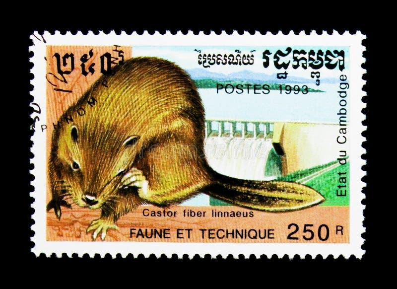 Eurasisches Biber-Gießmaschinenfaser linnaeus, Verdammung, Fauna und Techniken serie, circa 1993 lizenzfreies stockfoto