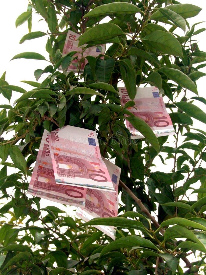 Euro albero dei soldi immagini stock