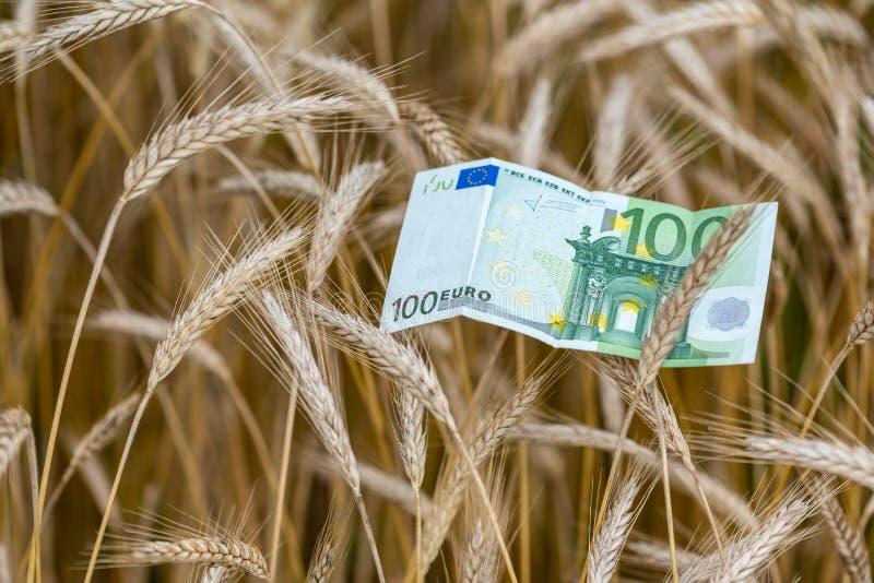 Euro banconota e grano fotografia stock libera da diritti