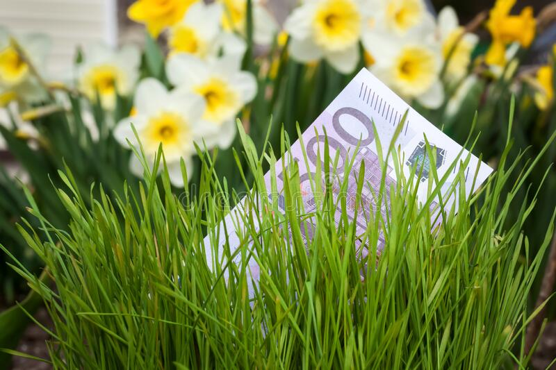 Euro banknote in green grass royalty free stock images