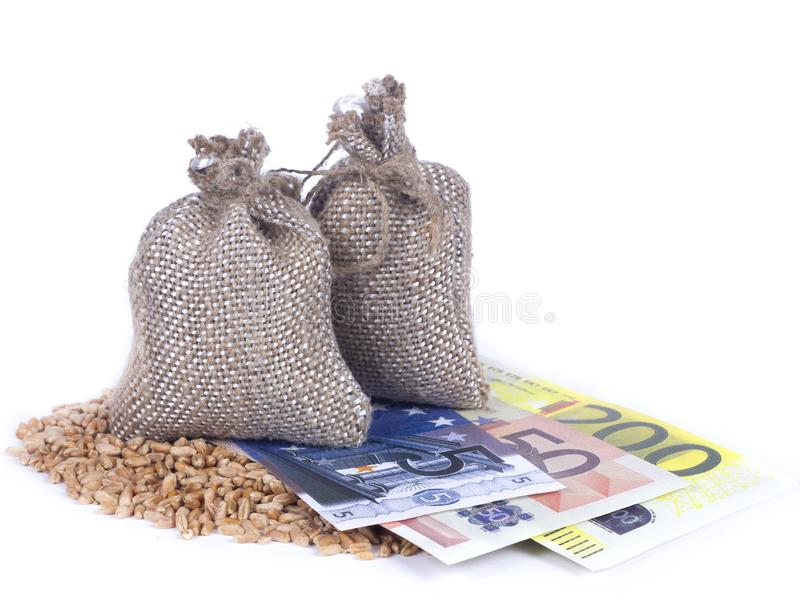 Euro banknotes among wheat grains under the sacks of grain on white background. Agricultural job, price change concept stock image