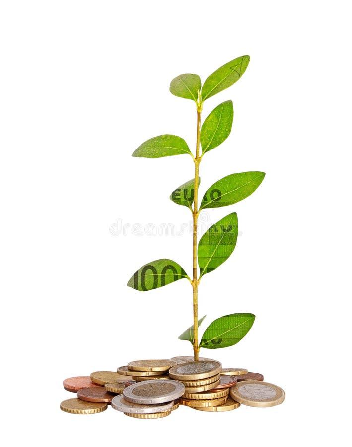 Euro- planta fotografia de stock