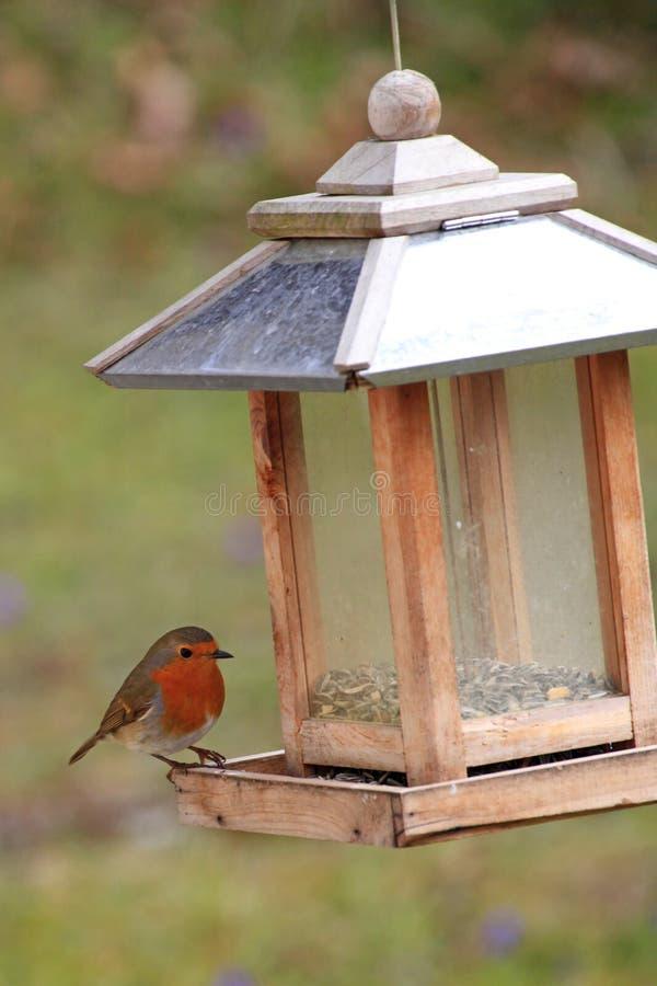 Europäer Robin/Erithacus rubecula an einer Vogelzufuhr lizenzfreies stockfoto