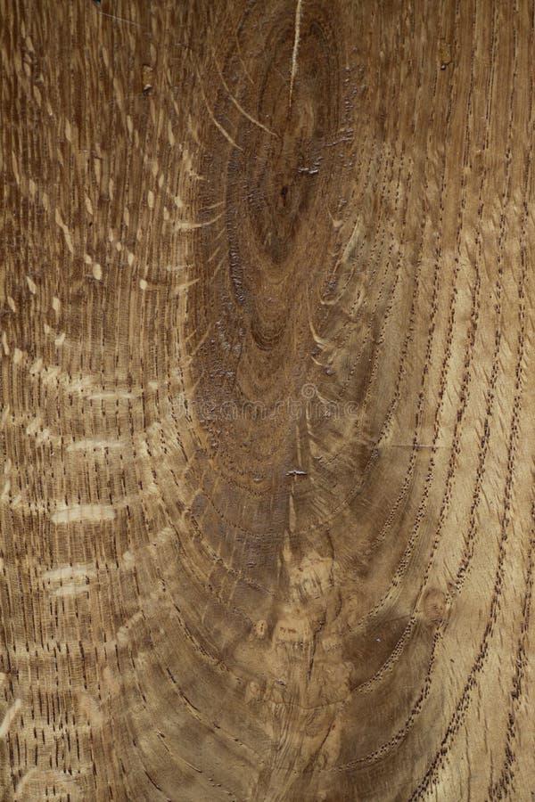 Europäischer Eichen-Holz-tangentialer Schnitt lizenzfreies stockbild