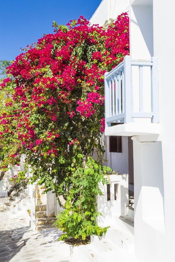 europa Grecia cyclades Isla de Mykonos Una casa griega típica en la calle estrecha con el balcón, la buganvilla floreciente y el  imagen de archivo libre de regalías