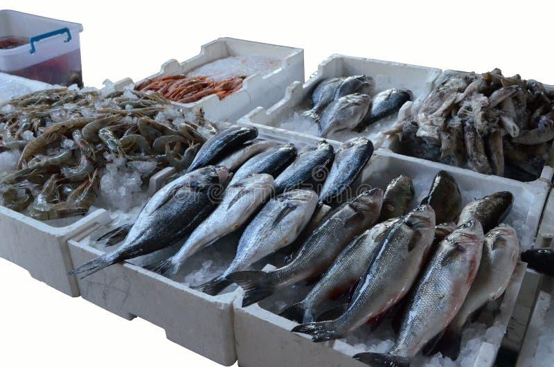 europa Mediterraan voedsel ADRIATISCHE OVERZEES Verkoop van onlangs gevangen vissen Sibasium Dorada garnalen kril royalty-vrije stock foto's