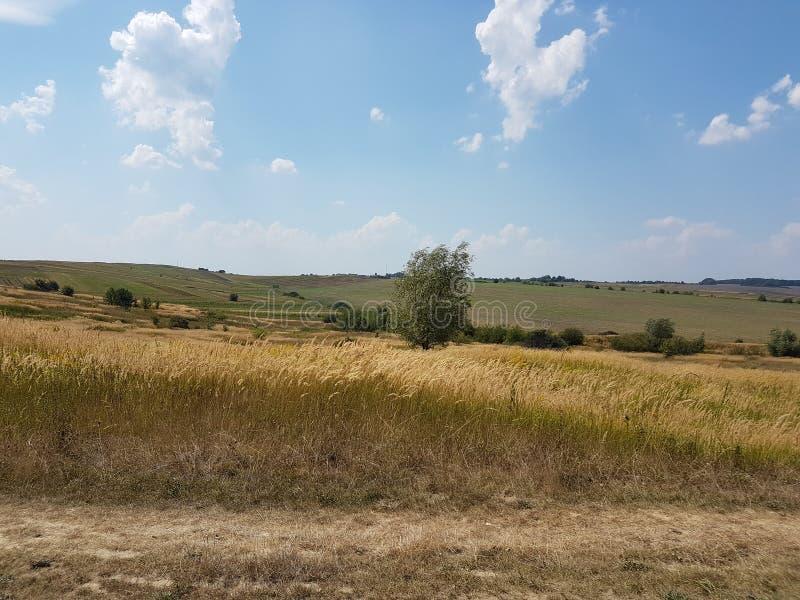 europa Paisagem ucraniana ocidental Campos da agricultura fotos de stock