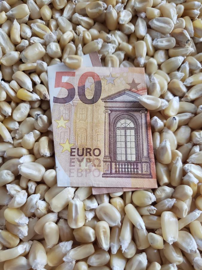 Europe, maize producing zone, dry corn grains and european banknote of fifty euro. Yellow edible seed, agriculture and harvest, world cereal production stock photo