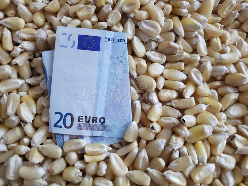 Europe, maize producing zone, dry corn grains and european banknote of twenty euro. Yellow edible seed, agriculture and harvest, world cereal production royalty free stock image