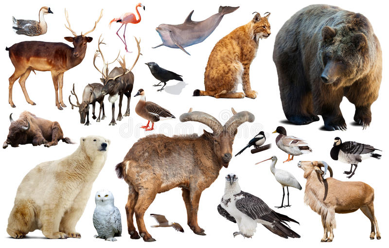 European animals isolated. Collection of different birds and mammals from Europe isolated on white background royalty free stock images