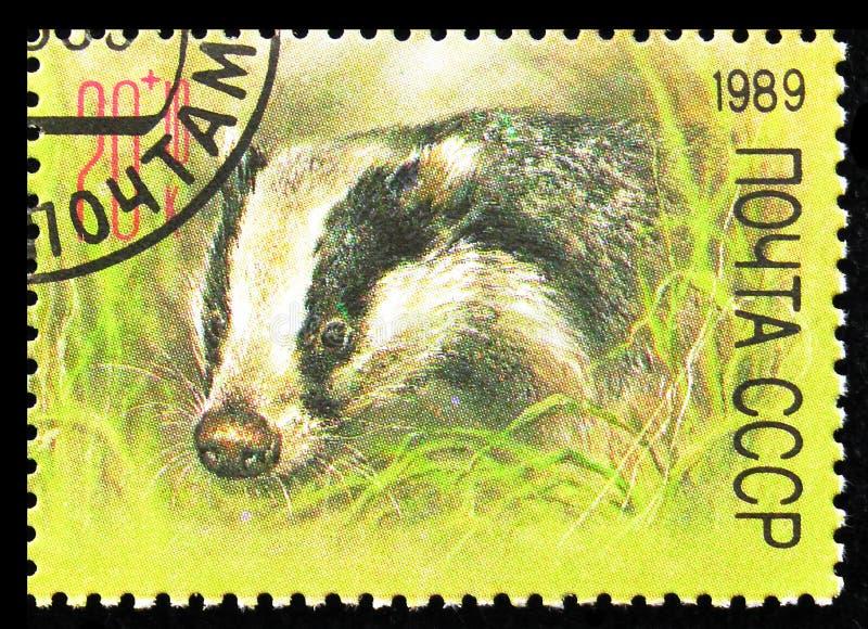 European Badger (Meles meles), ZOO Relief Fund serie, circa 1989 arkivfoton