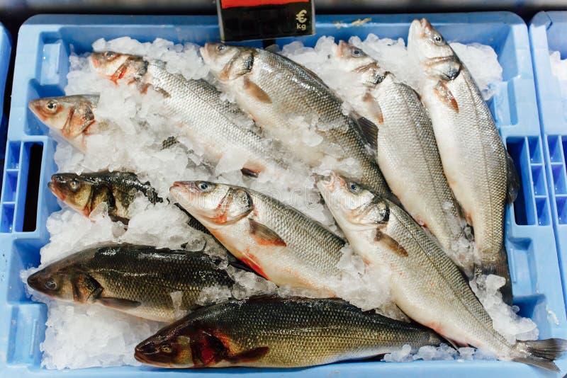 European bass on ice tray stock photo