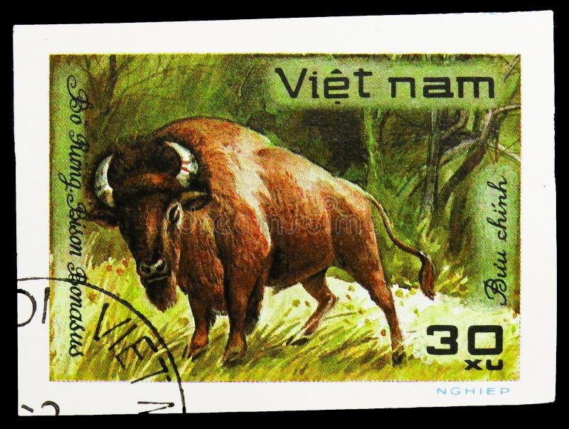 European Bison (Bison bonasus), World wild animals serie, circa 1981. MOSCOW, RUSSIA - SEPTEMBER 26, 2018: A stamp printed in Vietnam shows European Bison (Bison royalty free stock photo