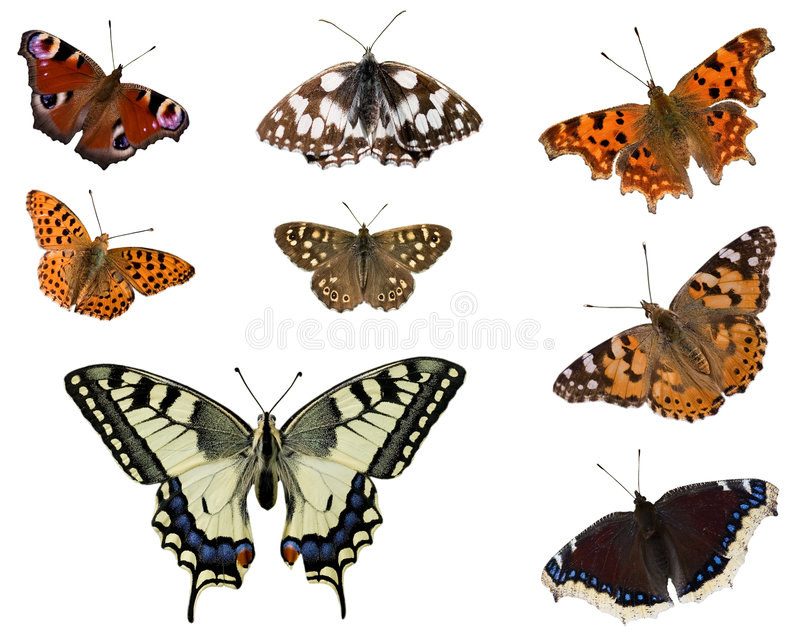 European butterflies. Set of some European butterflies isolated on white stock image