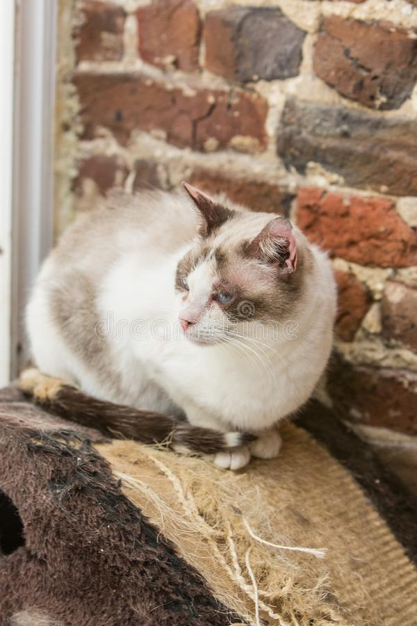 European cat in animal shelter in belgium. Portrait of european cat in animal shelter in belgium nand who was waiting for a new family in an animal shelter royalty free stock images