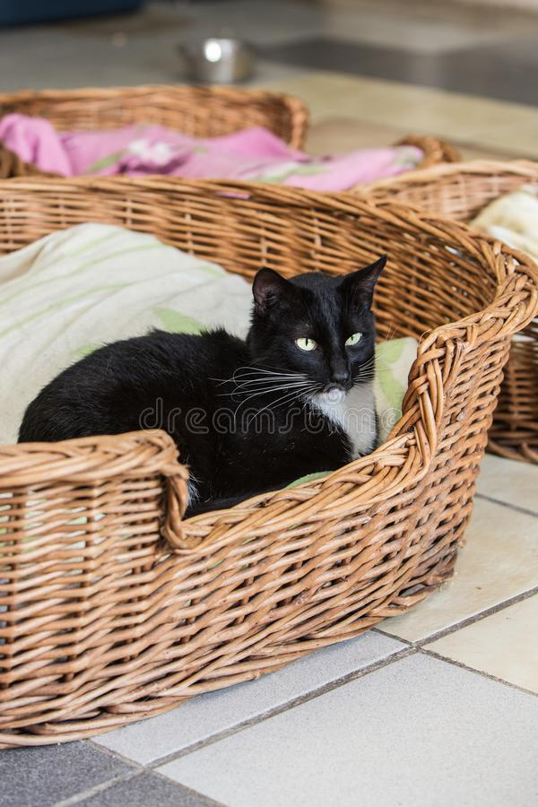 European cat in animal shelter in belgium. Portrait of european cat in animal shelter in belgium nand who was waiting for a new family in an animal shelter royalty free stock photography